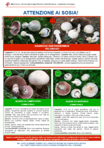 Funghi velenosi - Infografica